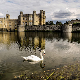 Leeds Castle Swan  by Jolyon Vincent - Buildings & Architecture Public & Historical