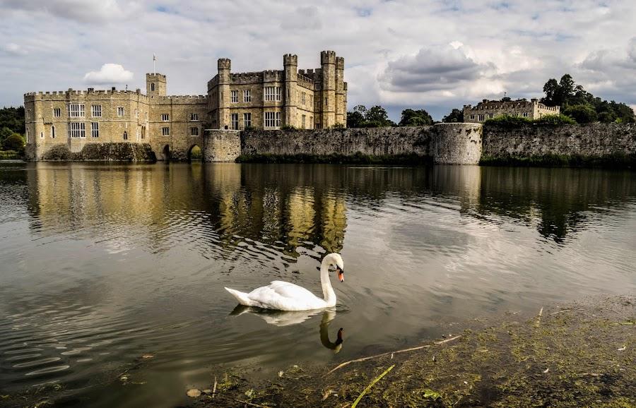 Leeds Castle Swan  by Jolyon Vincent - Buildings & Architecture Public & Historical