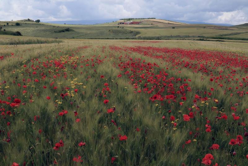 La primavera nei campi coltivati di braxittu