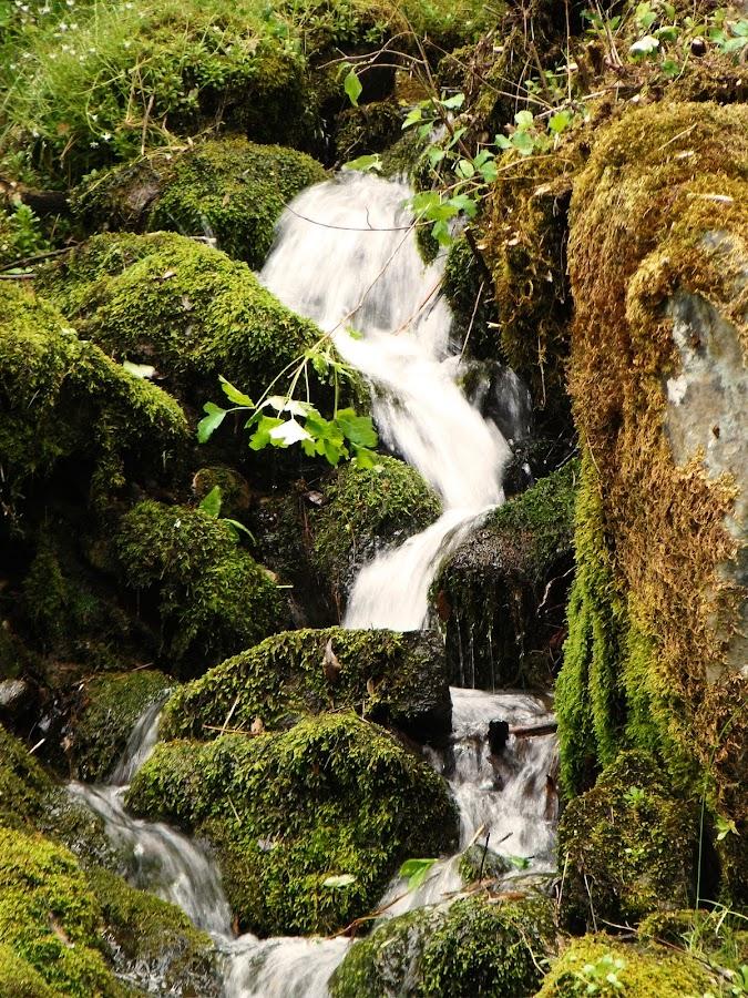 Natural Spring Water Fall by Tamara Luevano Britt - Nature Up Close Water
