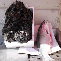 vendita del salmone e delle cozze di
