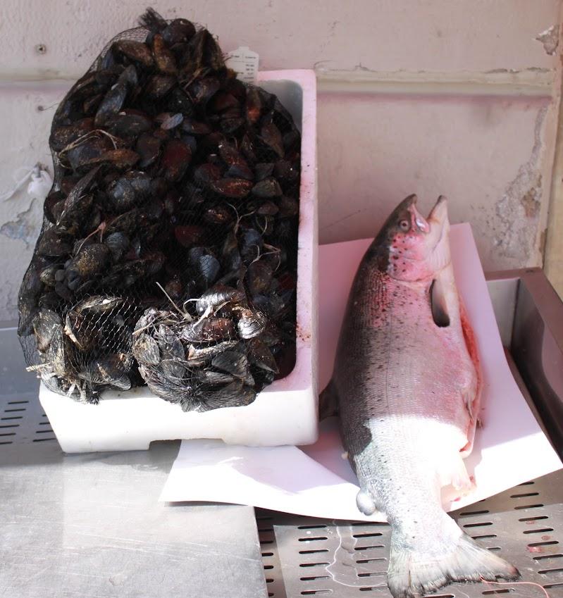 vendita del salmone e delle cozze di Antonio De Felice