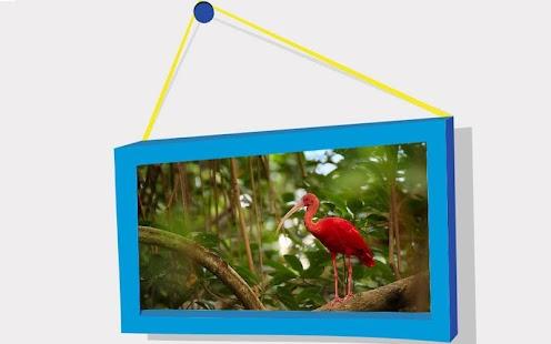 Zvířata Puzzle: Birds - náhled