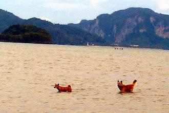 Photo: Морские собаки в окрестностях Ао Нанга