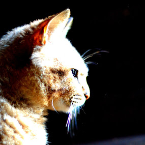 Sharp eye by Rafael Jatiaji - Animals - Cats Portraits ( potrait, cat, dark, light, animal )