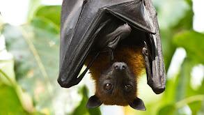 Bats thumbnail