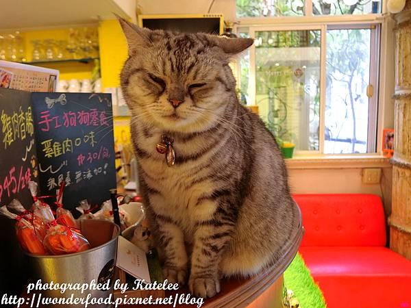 Monas Cafe寵物咖啡