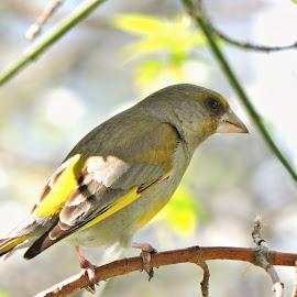 by Helen Beatrice - Animals Birds