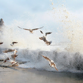 Wave by Alex Alex - Landscapes Weather ( seagull, wave, casino, frightened, birds )