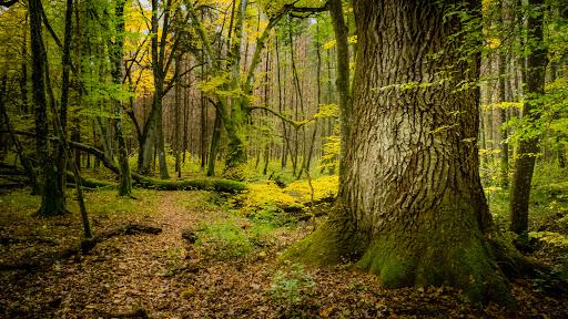 Alsó erdő