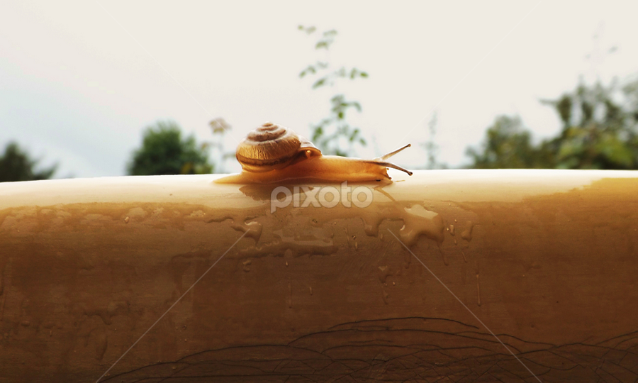 S L O W !!! by Imran Haider - Novices Only Wildlife ( wet, slow, snail )