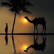 К чему приснился верблюд?