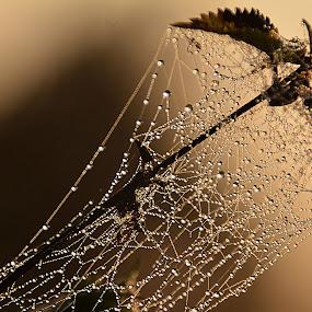 Pavučinka by Jana Černošková - Nature Up Close Webs ( web,  )