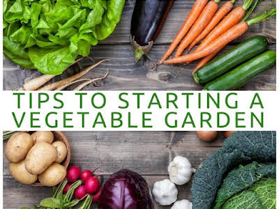 Tips to Starting a Vegetable Garden