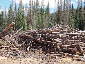 Photo: Firewood is no longer available here at the ski area.