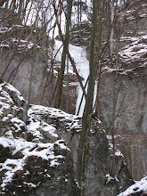 Photo: Pa ravno za drevesom se skriva