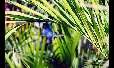 Photo: Broad Billed Hummingbird