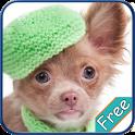 Chihuahua+ Free icon