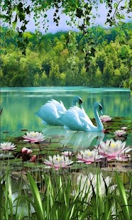Swans and Lilies LWP - náhled