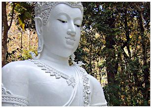 Photo: Buddha & Trees