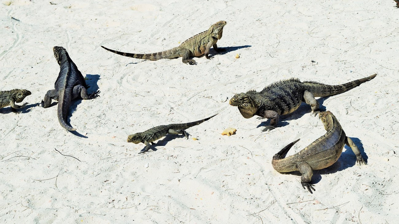 В поисках потерянного рая. 2 недели на острове Кайо Ларго в 150 фото