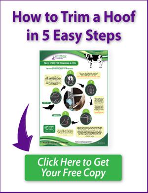 5 steps to trim cow