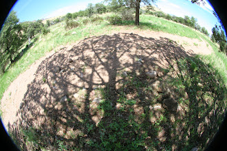 Photo: Oak Shadow.