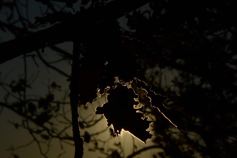 Eclissi di fil2000