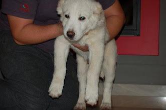 Photo: maschio BALLU 23-01-2012