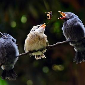 Feeding time #3 by Sigit Purnomo - Animals Birds (  )