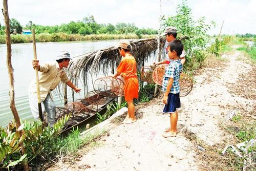 Mùa mưa về vườn quốc gia U Minh Hạ đặt lờ bắt cá 5