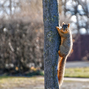 Getting A Little Squirrely by Kellie Prowse - Animals Other Mammals ( red, tree, flipping off, hand motions, squirrel, hand gestures )