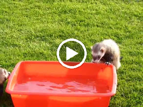"""Video: Franklin and especially Tigger enjoying the water """"tub"""" on a (rare) warm evening."""