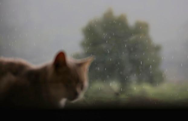 Piove... di braxittu