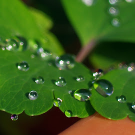 Leves after the Rain by Ingrid Anderson-Riley - Nature Up Close Leaves & Grasses