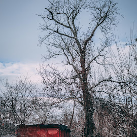 old barrack  by Paul Voie - Novices Only Objects & Still Life ( red, old house, nature, tree, winter,  )