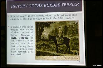 Photo: Rasseportrait Border Terrier