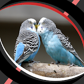Live Wallpapers - Love Birds