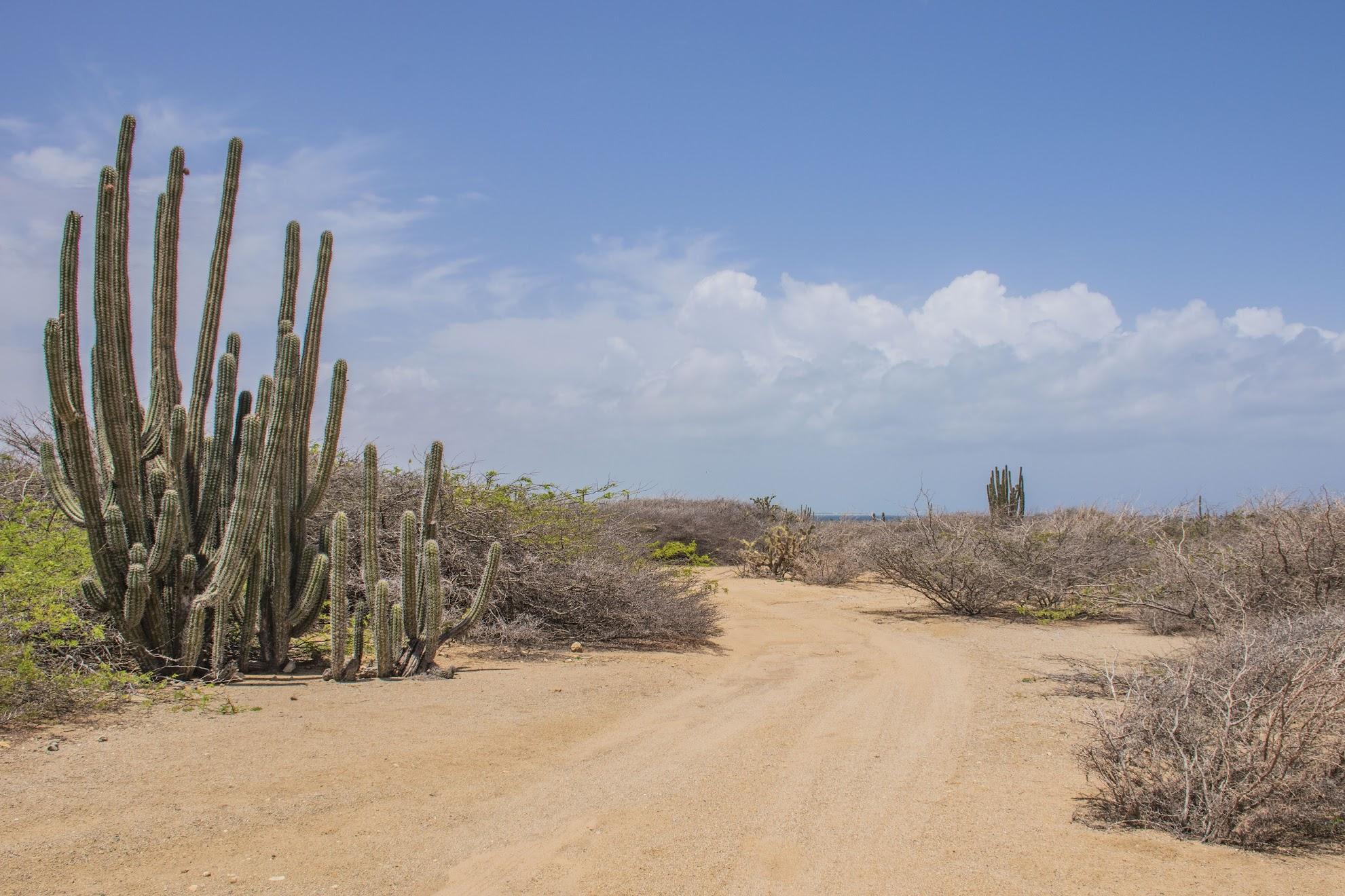 landschap-aruba
