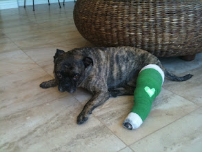 Photo: Kilo with his cast on :-(