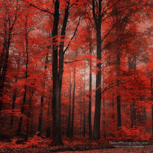 """Photo: Hi dear friends,  """"Red Dress"""" new photo in the Fall album.  REMINDER Best of Autumn 2011 - The ebook: http://www.naturephotographie.com/best-of-automne-2011/ Best of Landscape Photographers (for inspiration) http://www.naturephotographie.com/photographes-du-monde/  Cheers - and thanks for your support here on G+ Have a nice week :)  #fallphotos #autumnphotography #naturephotography #photography"""