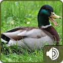 Duck Sounds icon