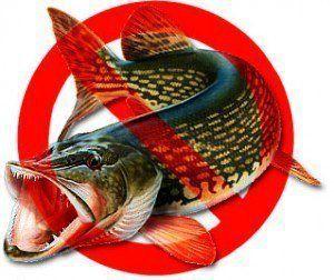 У більшості регіон України з 1 квітня по 30 червня вилов риби заборонений, через нерест.