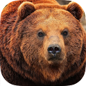 Bear Wallpaper icon