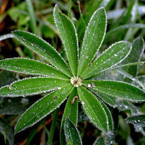 najveći među ostalima by Jelena Puškarić - Nature Up Close Leaves & Grasses (  )