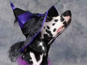 Photo: Witchy Roxy