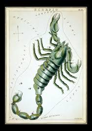 Scorpios are represented by the scorpion.