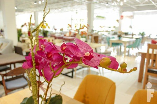 hoa vải tại furnist