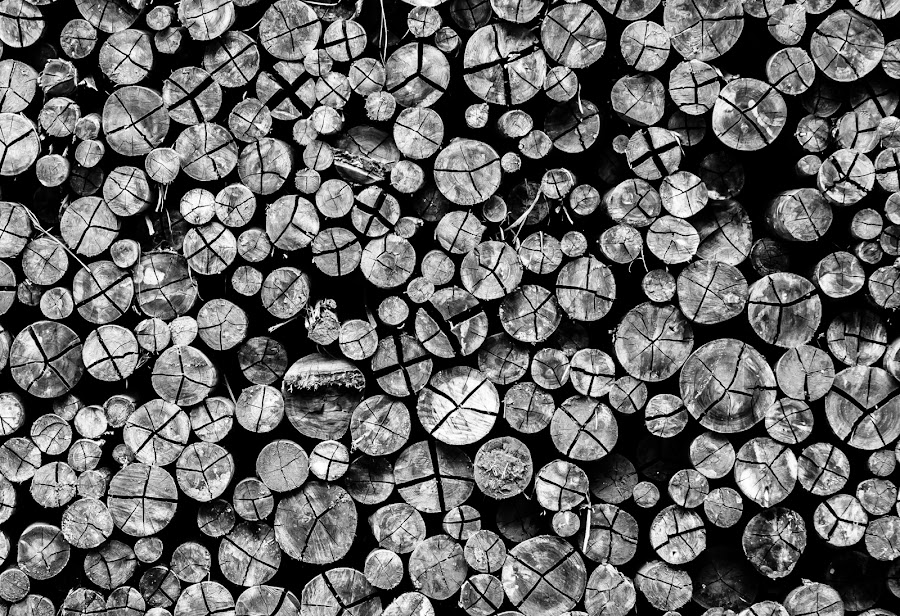 Logs by Francois van der Merwe - Abstract Patterns ( abstract, pattern, black and white, circle, log, pwc79 )