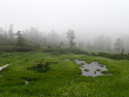 2301m先の鞍部は湿地帯
